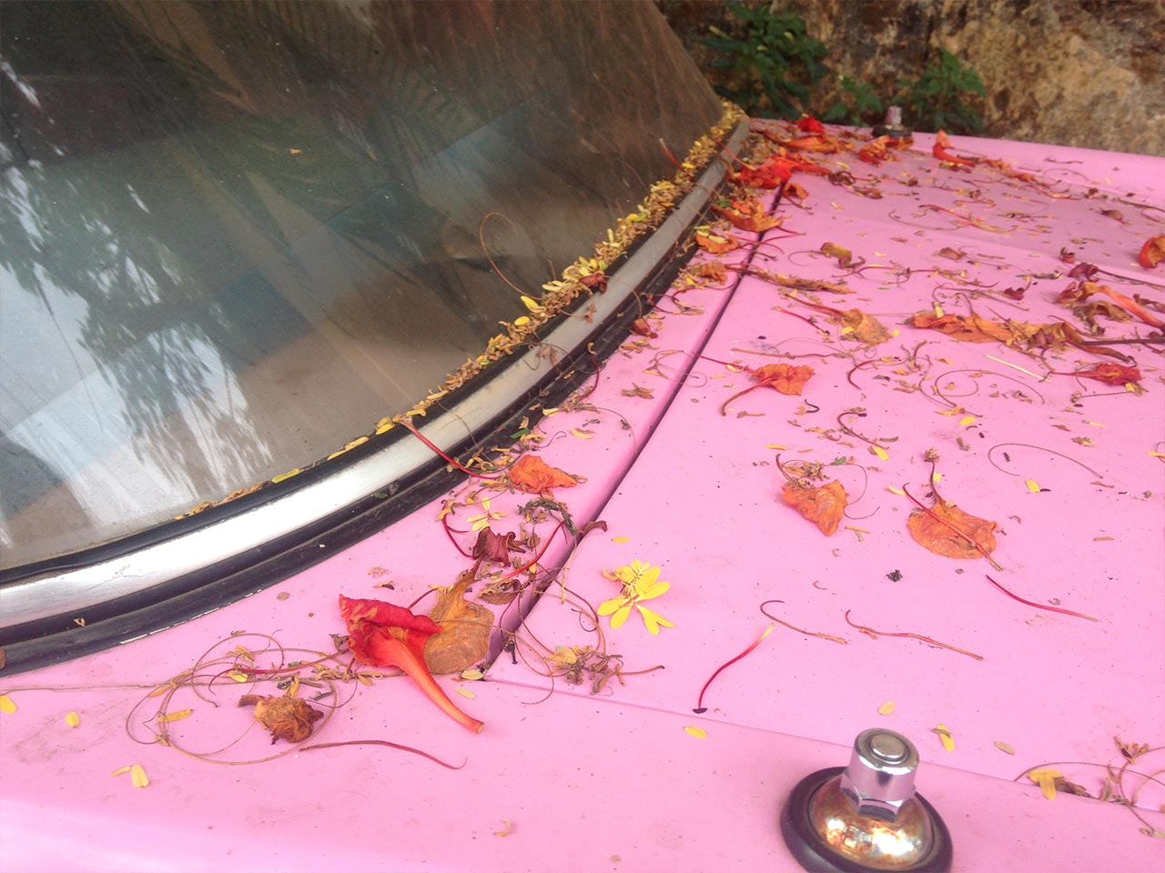 colorful india pink car