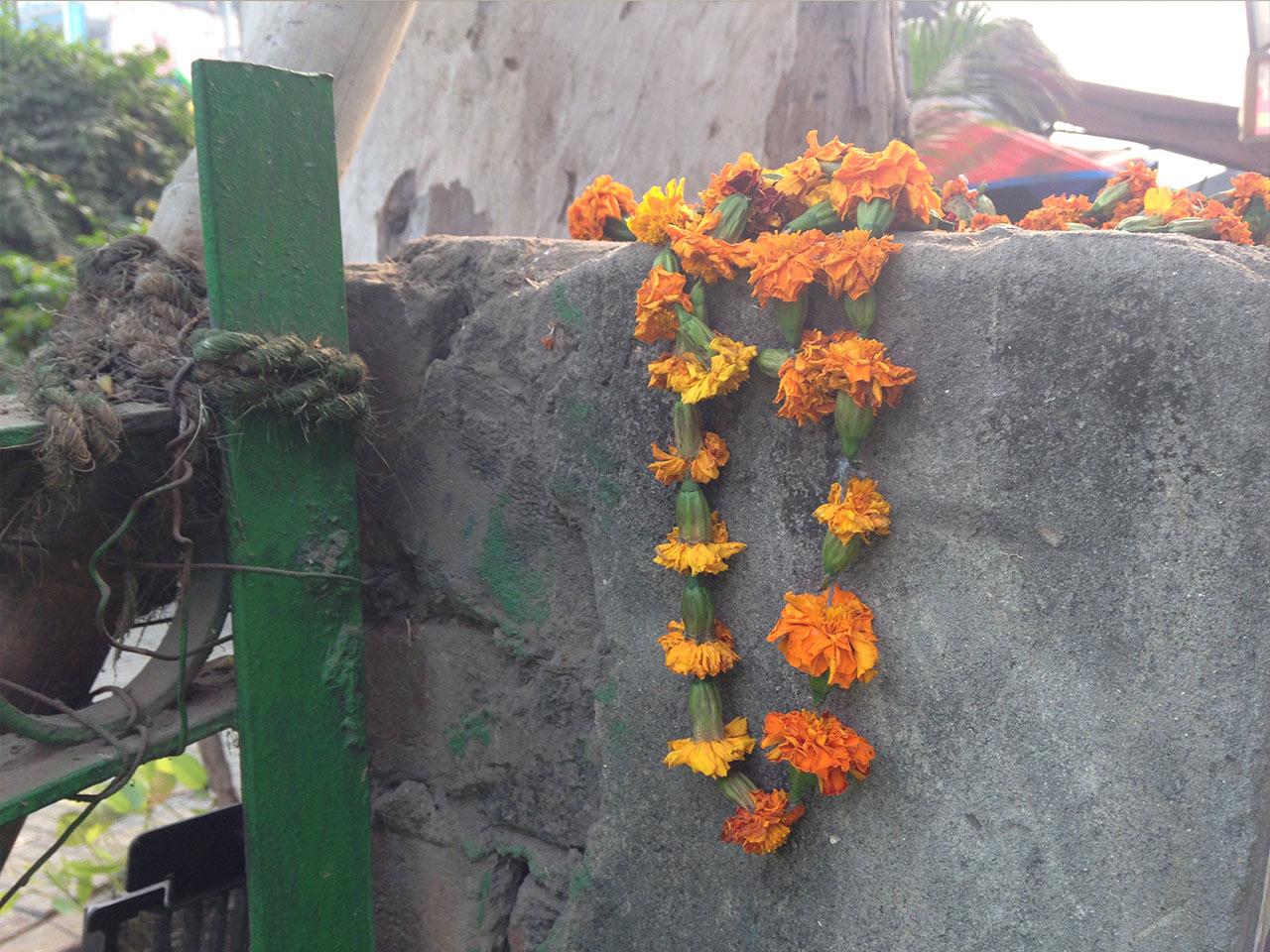 Delhi-Marigolds